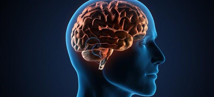 7 principes éducatifs tirés des neurosciences